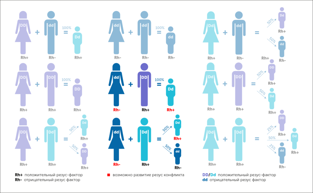 rhesus infographic, резус-фактор